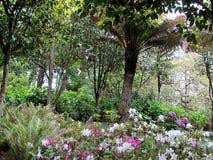 Giardino di Sintra vicino al palazzo famoso di Pena in Sintra, Portogallo fotografia stock libera da diritti