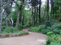 Giardino di Sintra vicino al palazzo famoso di Pena in Sintra, Portogallo fotografie stock libere da diritti