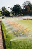 Giardino di Spart con il sistema funzionante di irrigazione a pioggia, immagini stock