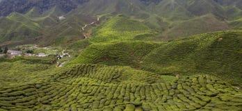 Giardino di tè, altopiano Malesia di Cameron Immagine Stock Libera da Diritti