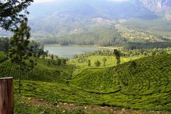 Giardino di tè del paesaggio di munnar, Kerala Fotografia Stock