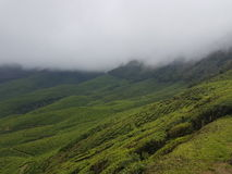 Giardino di tè di Iduki, Karala Immagini Stock