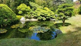 Giardino di tè giapponese immagine stock