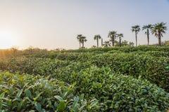 Giardino di t? di Maojiabu fotografie stock