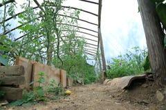 Giardino di verdure della serra Fotografia Stock