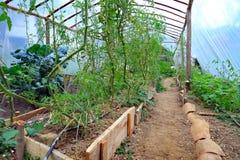 Giardino di verdure della serra Fotografie Stock Libere da Diritti