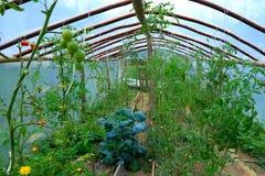 Giardino di verdure della serra Immagini Stock