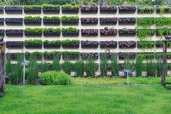 Giardino di verticale della parete del fiore Immagini Stock