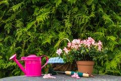 Giardino differente della molla delle piante degli strumenti Fotografia Stock