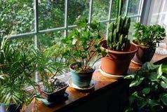 Giardino domestico Immagine Stock Libera da Diritti