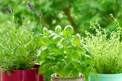 Giardino domestico del `s dell'erba fotografie stock libere da diritti