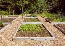Giardino domestico nel giorno di estate caldo Fotografia Stock Libera da Diritti