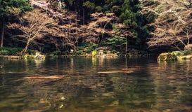 Giardino e carpe a specchi giapponesi nello stagno Fotografia Stock Libera da Diritti
