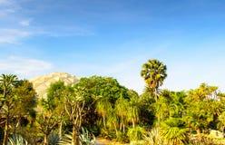 Giardino e cielo del deserto Fotografia Stock Libera da Diritti