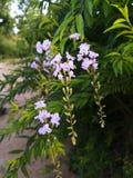 Giardino e fiori Fotografia Stock Libera da Diritti