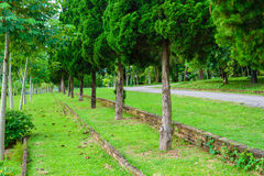Giardino e strada nel parco Fotografia Stock