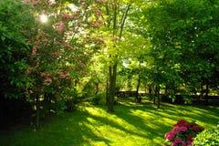 Giardino in estate immagini stock