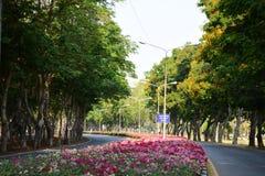 Giardino & fiore Immagine Stock
