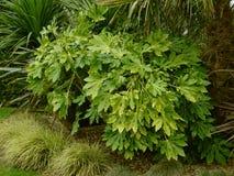 Giardino Flora Background Immagini Stock Libere da Diritti
