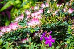 Giardino floreale Immagine Stock Libera da Diritti