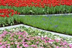 Giardino floreale Immagini Stock