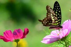 Giardino floreale fotografia stock