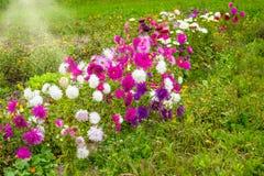 Giardino floreale Fotografie Stock