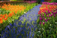 Giardino floreale Fotografia Stock Libera da Diritti