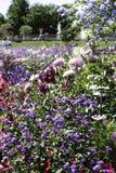 Giardino floreale al palazzo di Luxemborg, Parigi fotografie stock libere da diritti