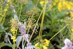 Giardino floreale caotico in piena fioritura Fotografie Stock