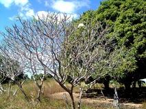 giardino floreale del papavero coltivato Immagini Stock
