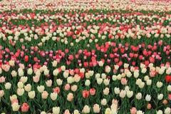 Giardino floreale dell'Expo Fotografie Stock