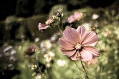 Giardino floreale di estate Fotografia Stock Libera da Diritti