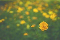 Giardino floreale giallo/fiori tropicali, fotografia di stile del film Fotografie Stock