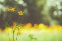 Giardino floreale giallo/fiori tropicali, fotografia di stile del film Fotografia Stock Libera da Diritti