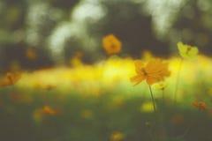 Giardino floreale giallo/fiori tropicali, fotografia di stile del film Immagine Stock