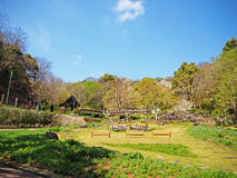 Giardino floreale Giappone Fotografia Stock