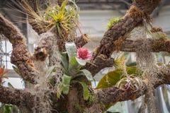 Giardino floreale magico Fotografia Stock