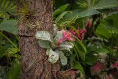 Giardino floreale magico Immagini Stock Libere da Diritti