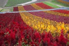 Giardino floreale nell'Hokkaido, Giappone Fotografie Stock Libere da Diritti