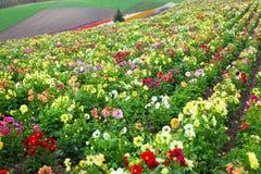 Giardino floreale nell'Hokkaido, Giappone Fotografia Stock Libera da Diritti