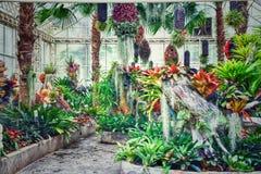 Giardino floreale in Tailandia nel nord-est fotografie stock libere da diritti