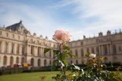 Giardino floreale Versailles Fotografie Stock Libere da Diritti