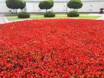 Giardino floreale a Vilnius immagine stock libera da diritti