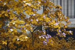 Giardino giallo Fotografia Stock Libera da Diritti