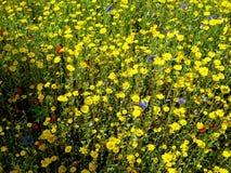Giardino giallo Fotografia Stock