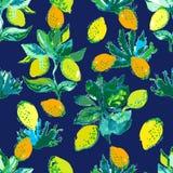 Giardino giallo dell'agrume Fotografia Stock Libera da Diritti