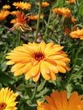 Giardino giallo di Paradies all'aperto fotografia stock
