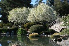 Giardino giapponese Immagine Stock Libera da Diritti