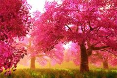 Giardino giapponese dei fiori di ciliegia di Sterious cartoony Immagine Stock Libera da Diritti